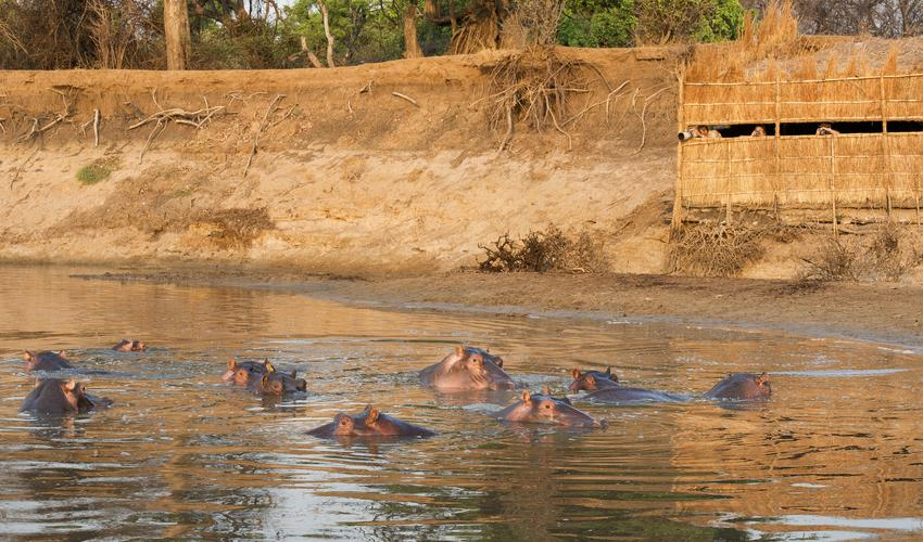 Hippo Hide is located on a deep corner at the confluence of the Luangwa and Mwamba rivers.