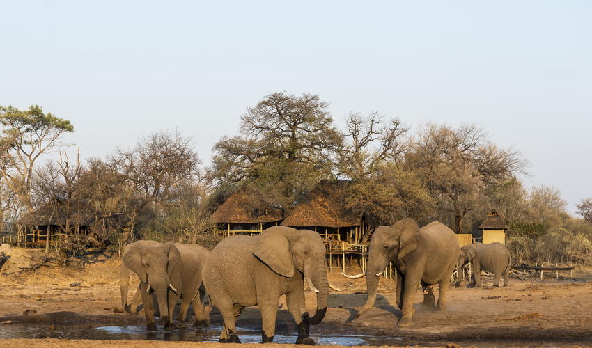 Elephant gather at the waterhole in front of camp