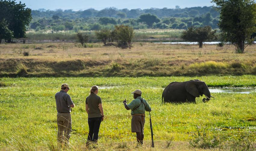 Game walk with professional safari guide