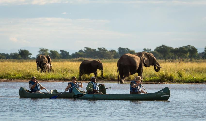 Canoeing on the Zambezi allows up-close game viewing