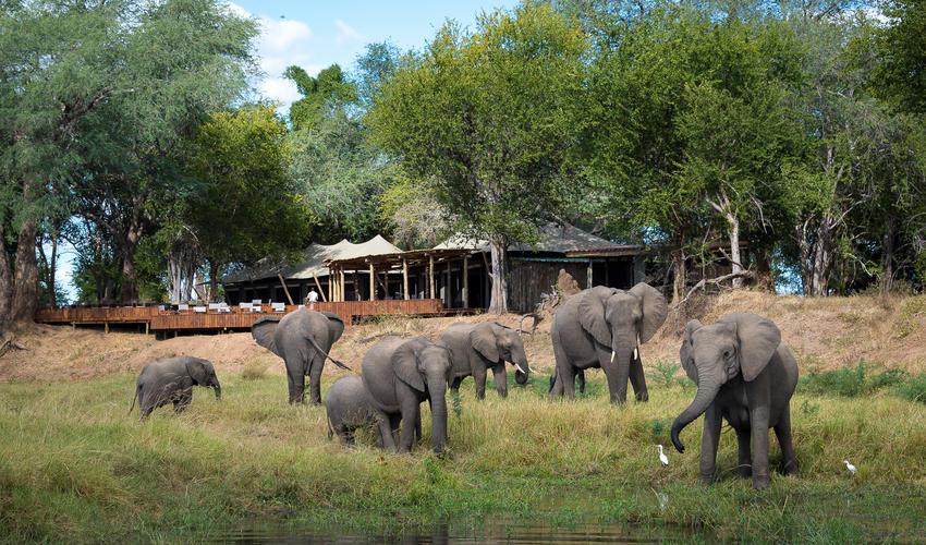 Ruckomechi is the elephants' favourite camp