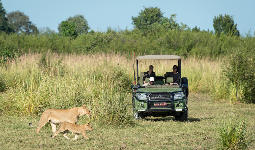 Predators such as lion are often sighted while on game drives