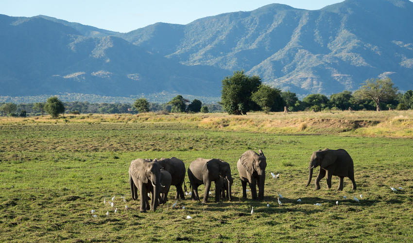 Elephant with the escarpment forms a stunning backdrop