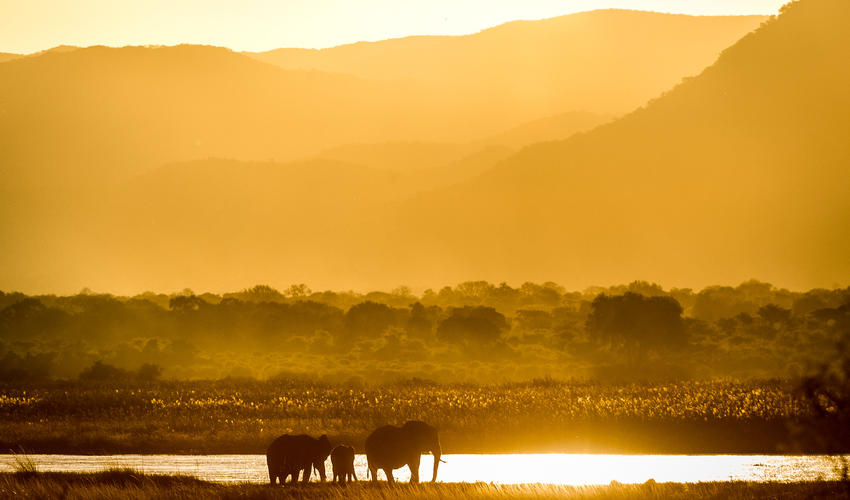 The Zambian escarpment provides a dramatic photographic backdrop, whether at sunrise or sunset