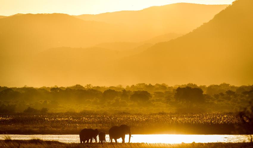 The Zambian escarpment provides a dramatic photographic backdrop, whether at sunrise or sunset