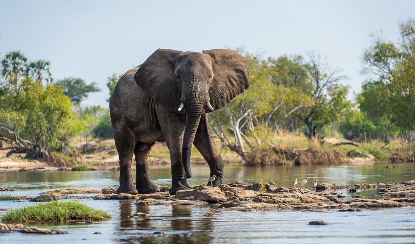 Elephant close to Toka Leya's rock pools
