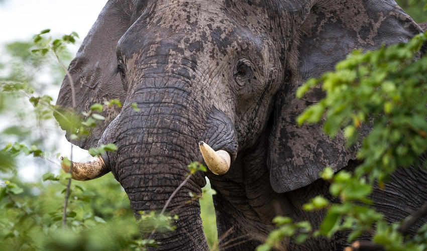 Elephant are regularly seen near camp