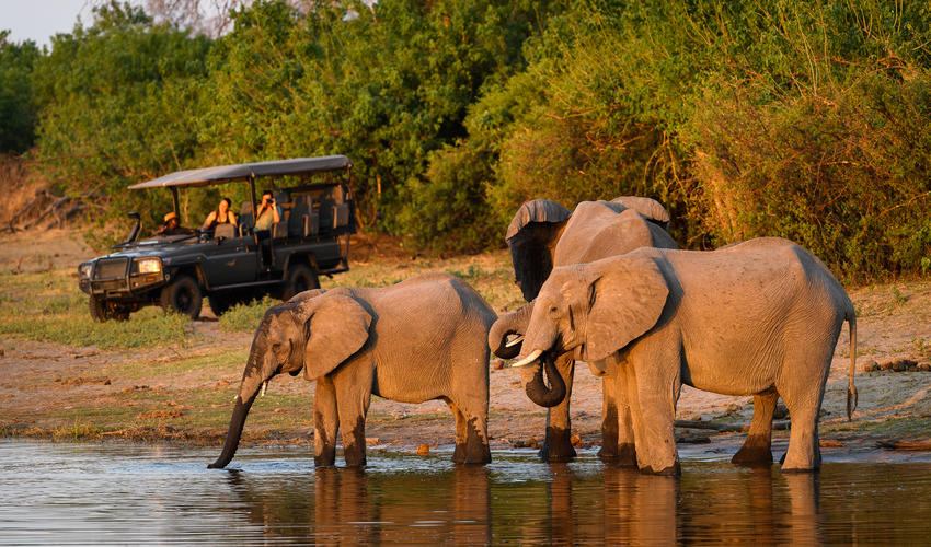 The Linyanti is known for its huge population of elephant