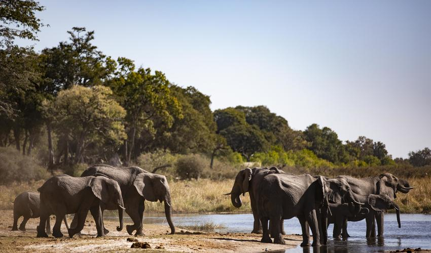 Elephant congregate to drink and bathe