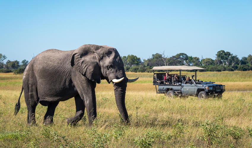Elephant seen from a game drive