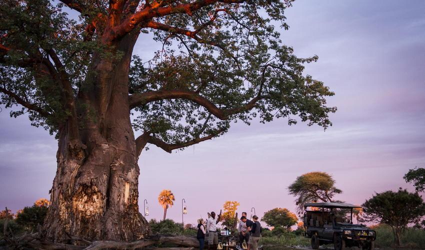 Sundowners under an iconic baobab
