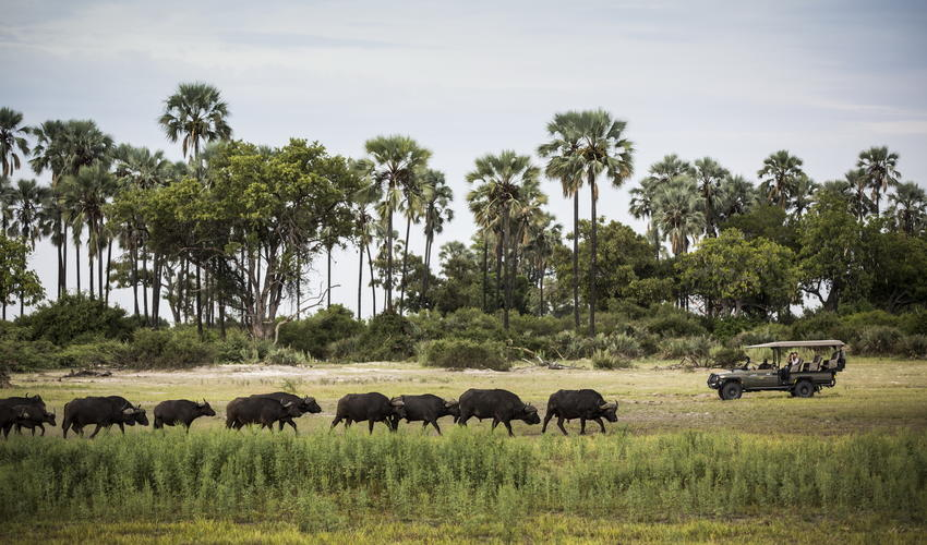 Mombo is considered one of the best areas for wildlife in Africa