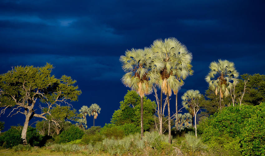 Palm, mangosteen and fig trees surround Kwetsani