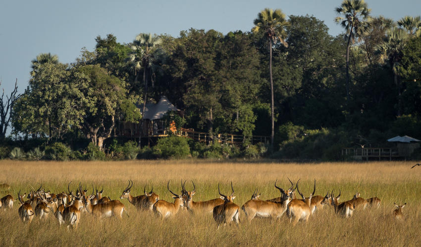 Wildlife is regularly seen right in front of camp