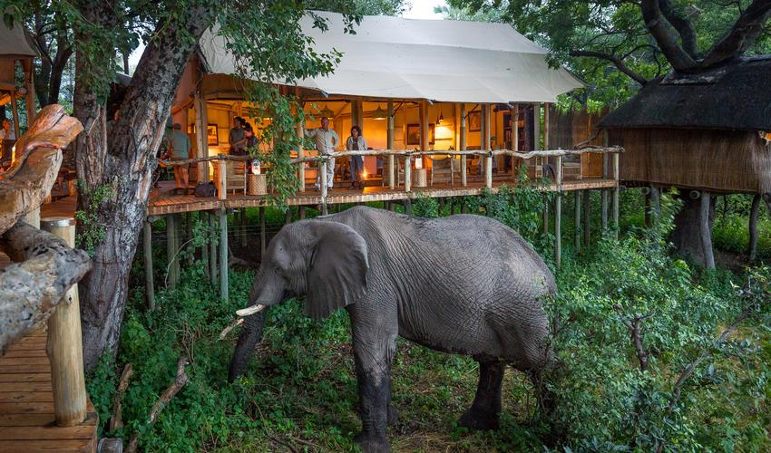 Elephant at Tubu
