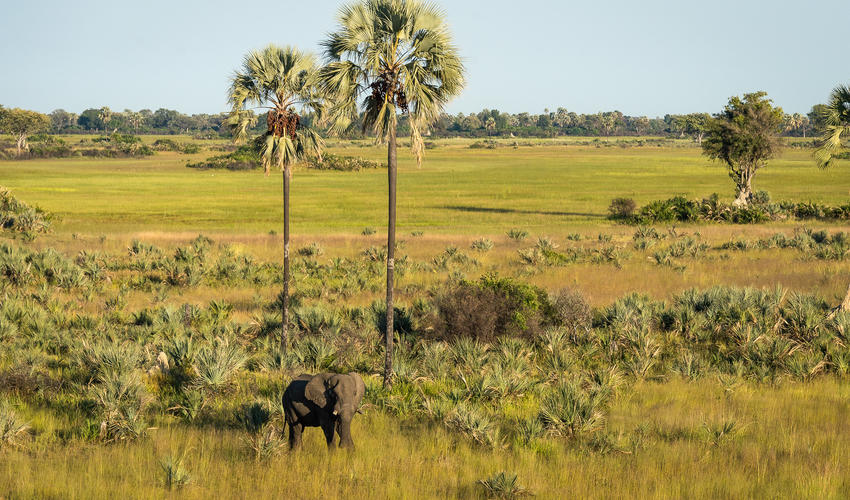 Elephant on the floodplain