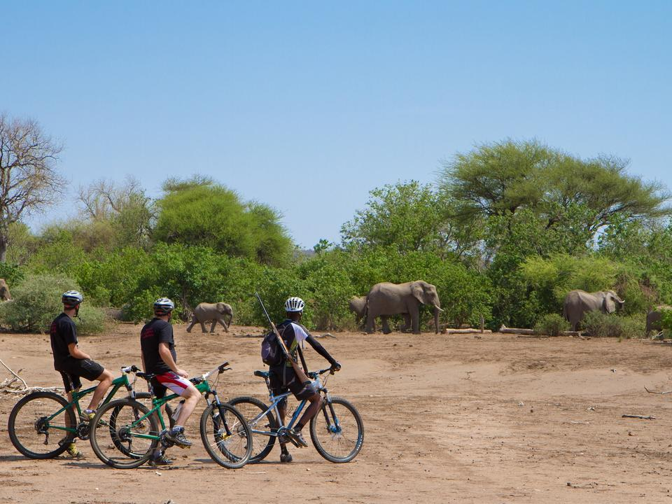 Mashatu Radsport Safari