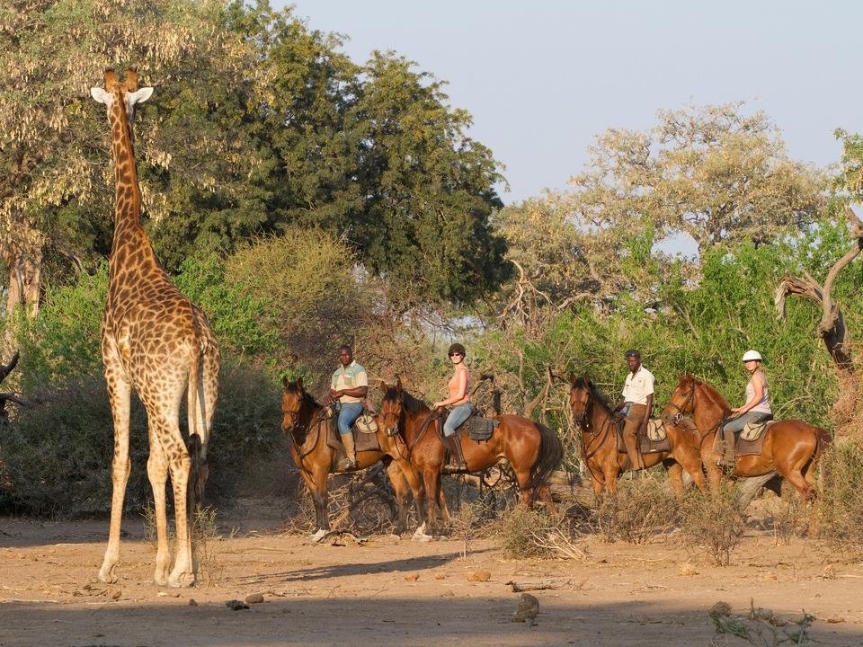 Mashatu Horse Safari