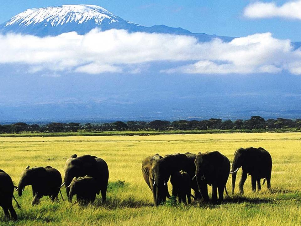 Elefanten und die Kulisse des Kilimandscharos