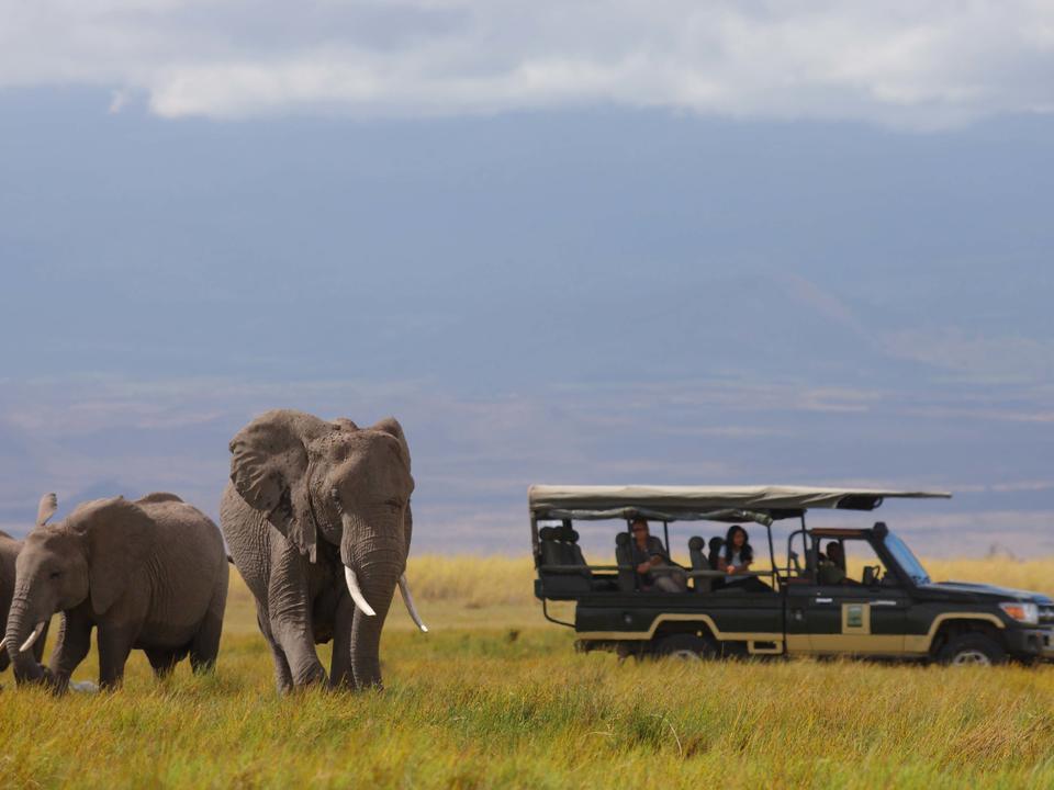 Spielen mit Amboselis berühmten Elefanten