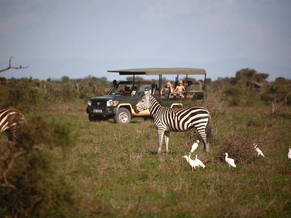Spiel fahren über die Ebenen von Amboseli