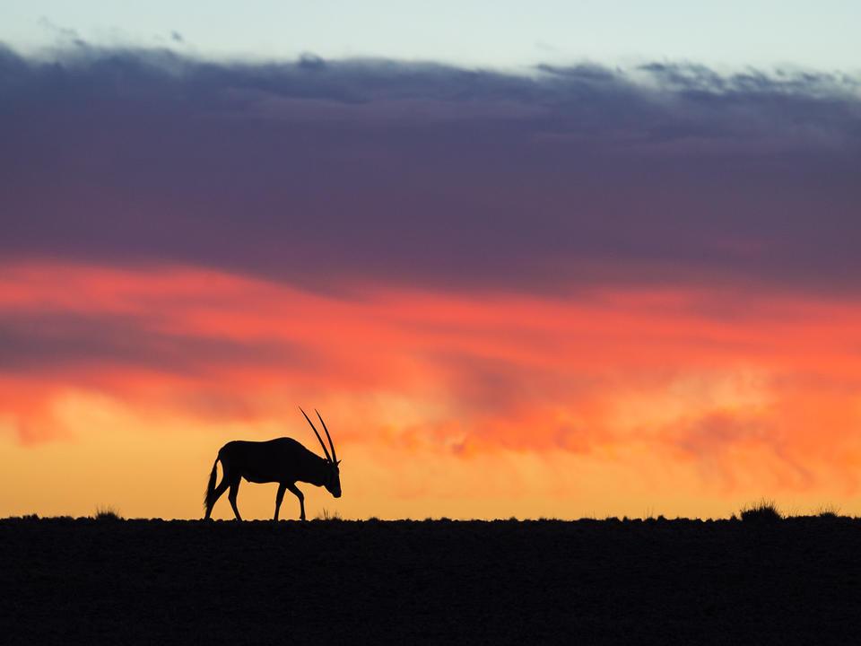 Zwei Kulala-Ikonen - gemsbok gegen einen Sossusvlei Sonnenuntergang