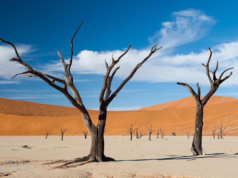 Die Kameldornbäume in Dead Vlei starben vor etwa 900 Jahren, aber es ist so trocken, dass sie sich nicht zersetzt haben.
