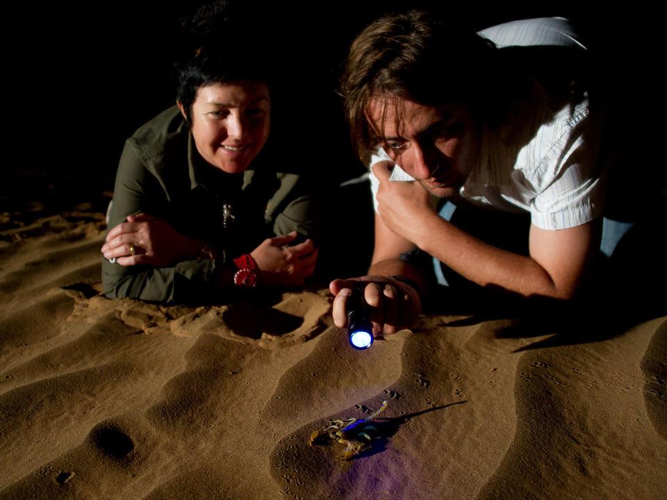 Auf der Suche nach Skorpionen
