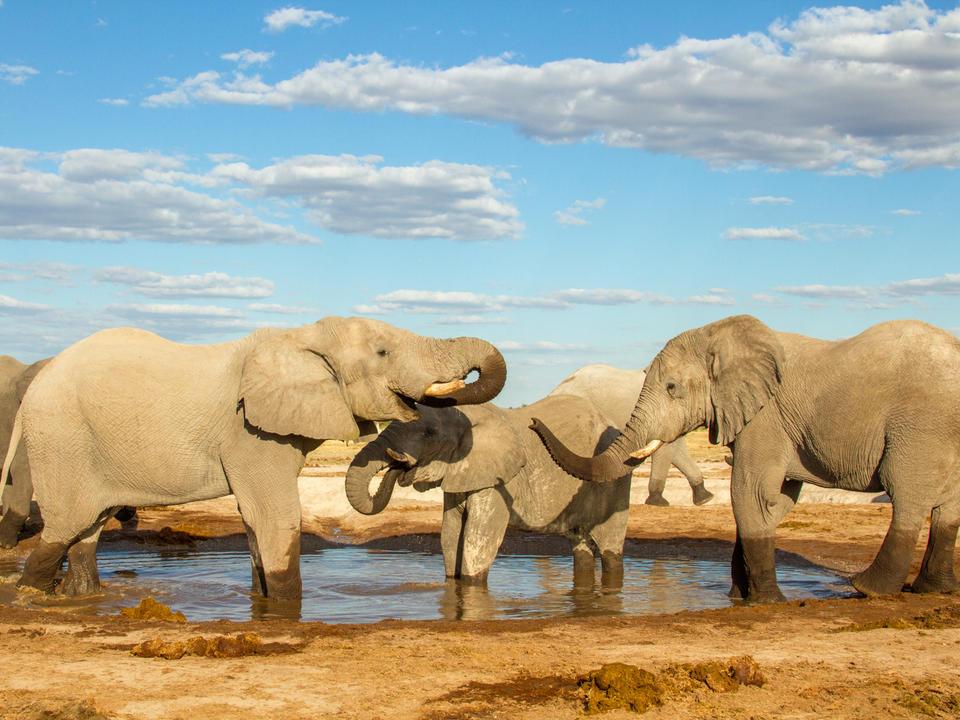 Elefanten am Wasserloch des Lagers