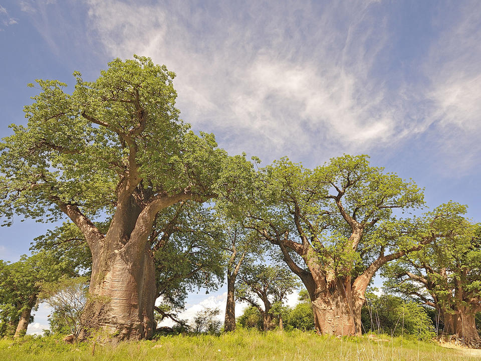 Tagesausflug nach Baines' Baobabs