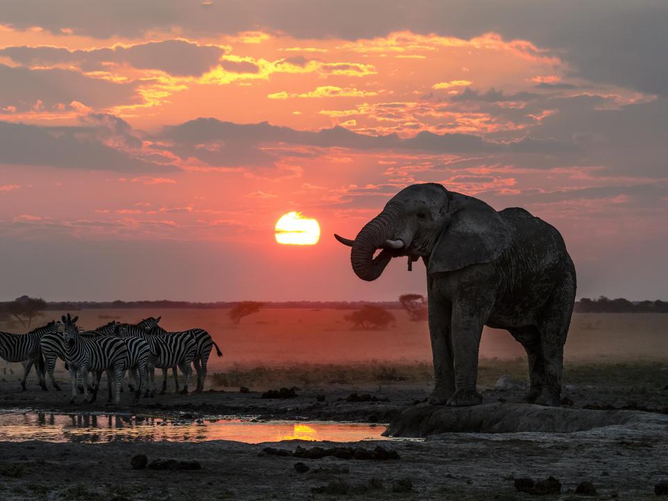 Klassische Nxai Pfanne in der grünen Saison mit Zebras