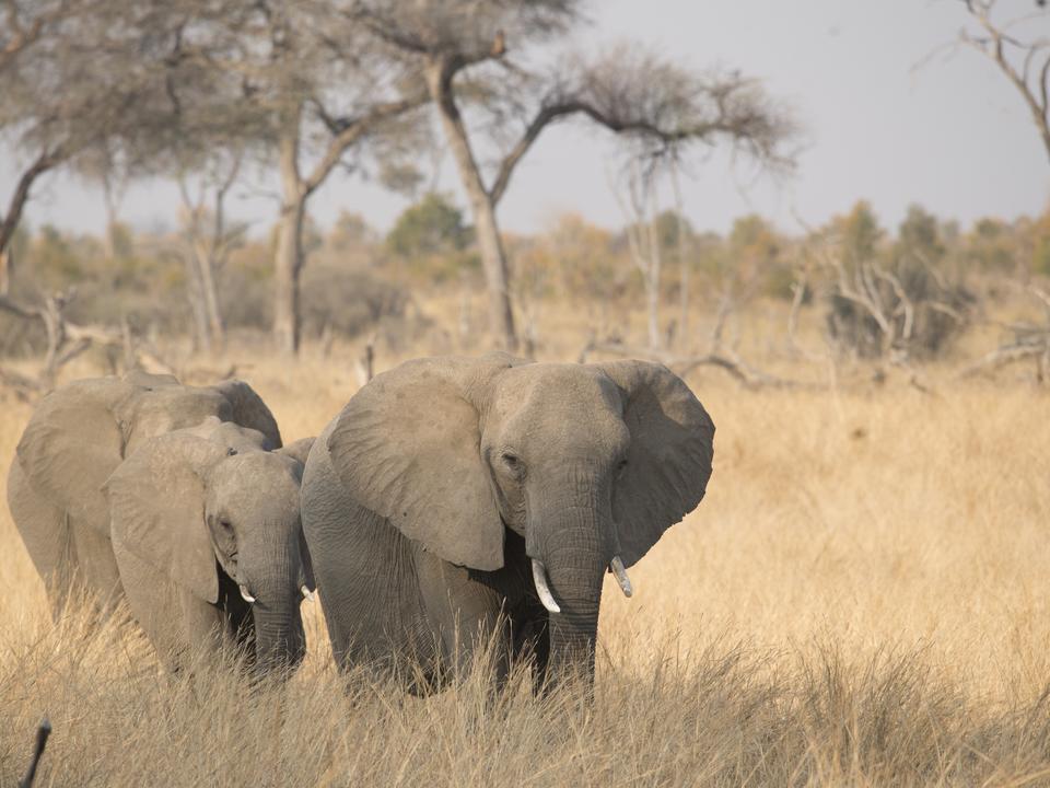 Elefanten während der Spielfahrt
