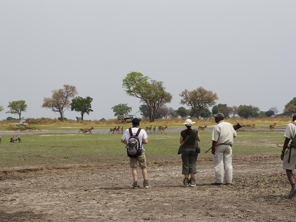 Wandern in der Wildnis ist der Höhepunkt eines echten Safari-Erlebnisses.