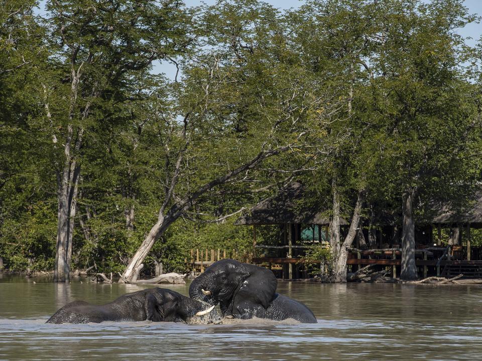Elefanten spielen in der vollen Pfanne