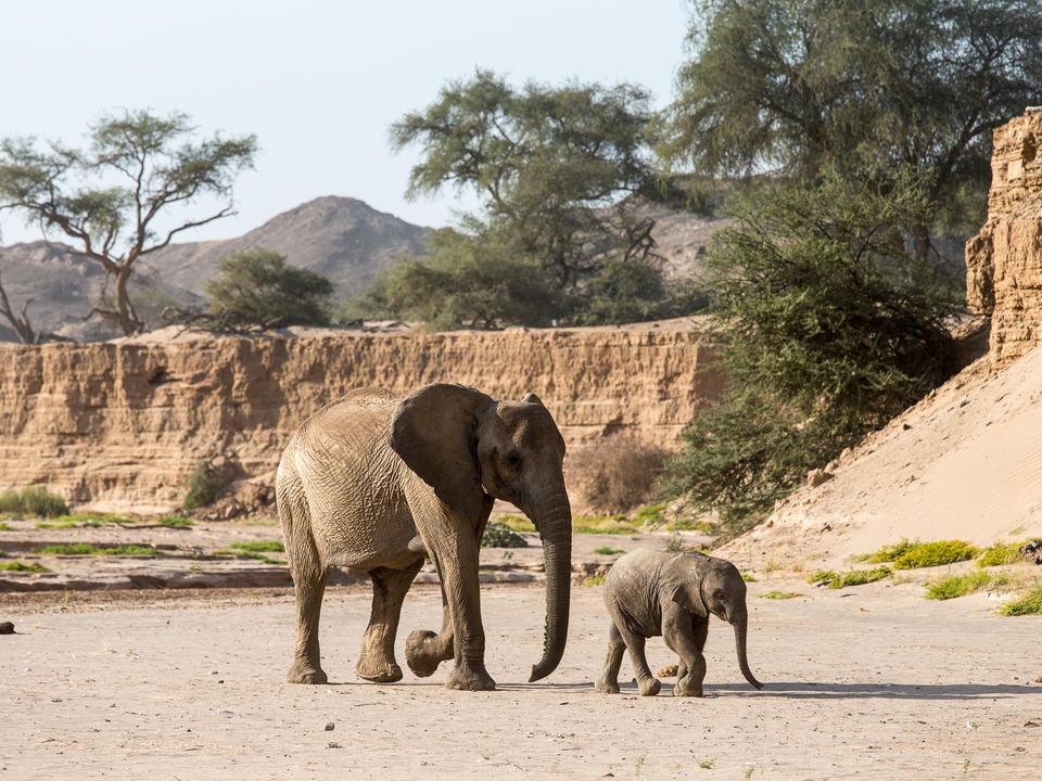 Elefant im trockenen Flussbett