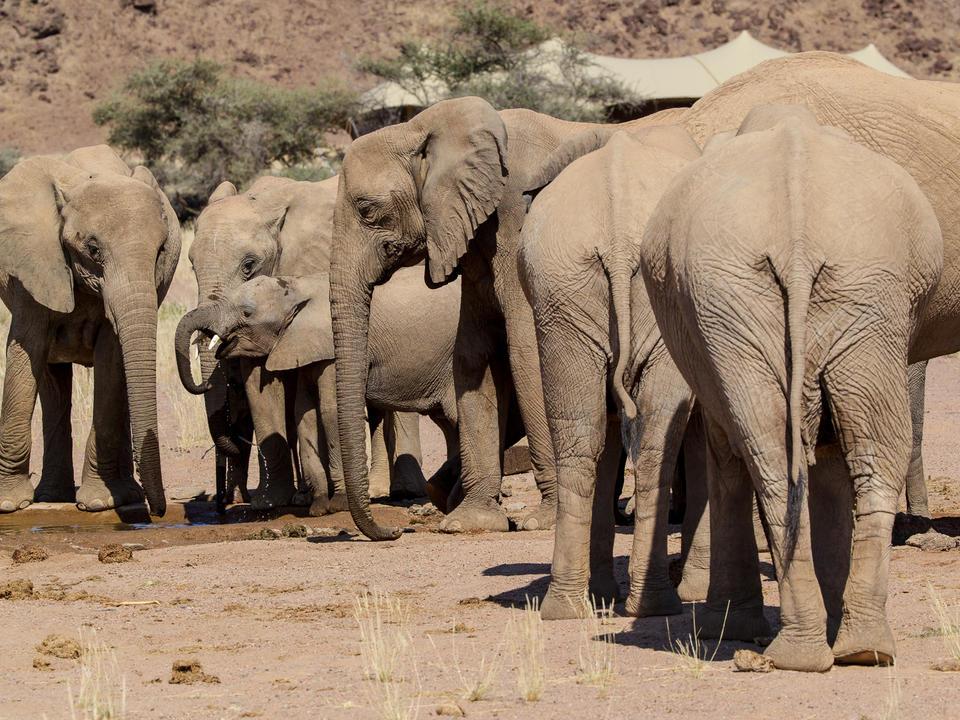 Elefant im Hoanib Skeleton Coast Camp