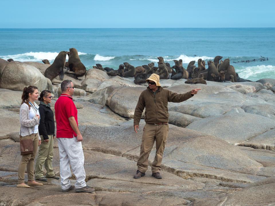 Besuch der Robbenkolonie an der Skeleton Coast