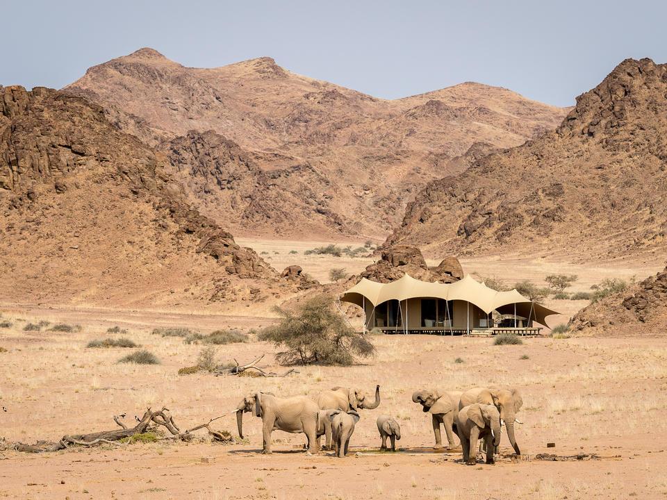 Elefant versammelt sich, um bei Hoanib zu trinken