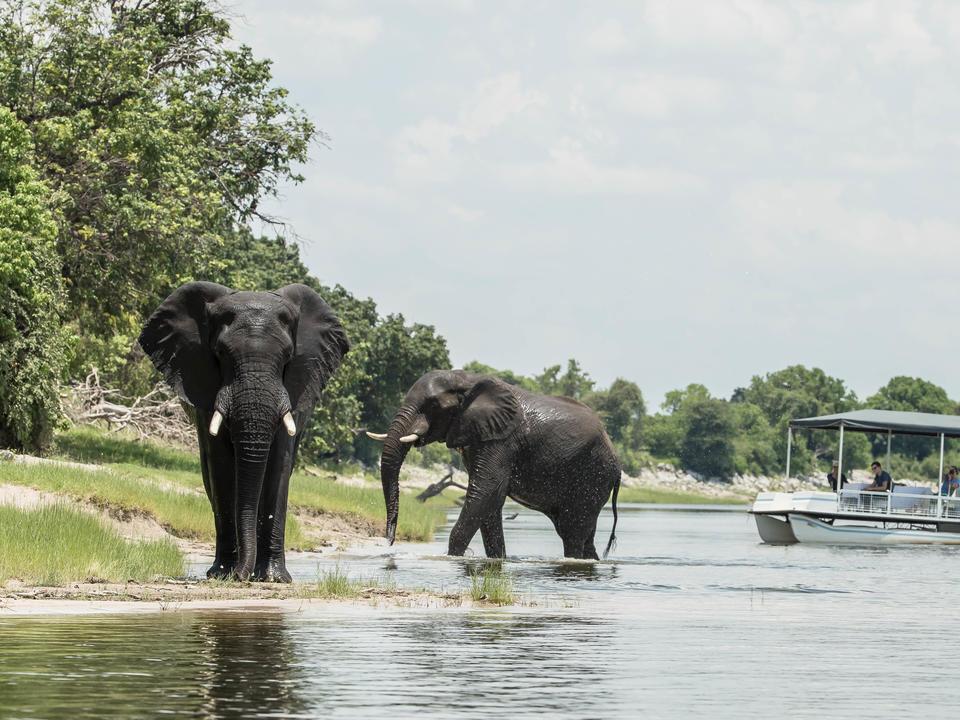 Genießen Sie einen ganztägigen Ausflug in die Chobe mit einer Boot-Safari mit einem Picknick-Mittagessen.