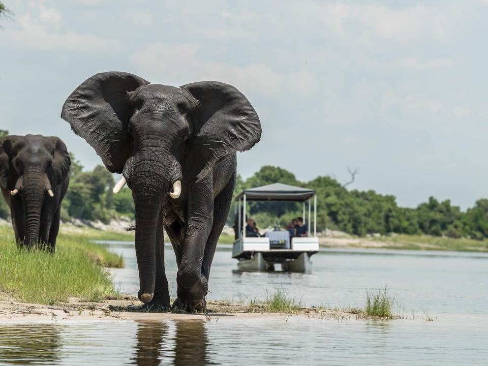 Genießen Sie den Chobe River für sich selbst, während Sie beobachten, wie die Elefanten kommen, um zu trinken