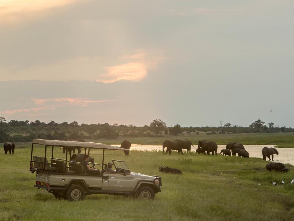 Genießen Sie die ruhigere Western Chobe auf den morgendlichen und nachmittags Pirschfahrten.