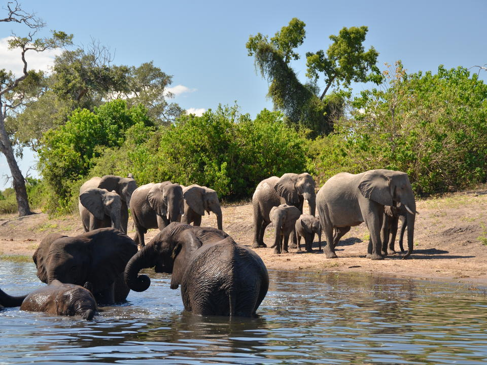 Der Chobe ist aus einem Grund beliebt - mit einer wunderbaren Tiervielfalt und erstaunlichen Spielkonzentrationen. The Chobe bietet ein unschlagbares Spielerlebnis.