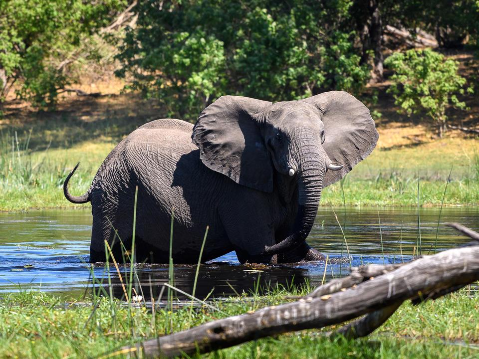 Das Gebiet von Savuti ist berühmt für seine erstaunlichen Elefantensichtungen
