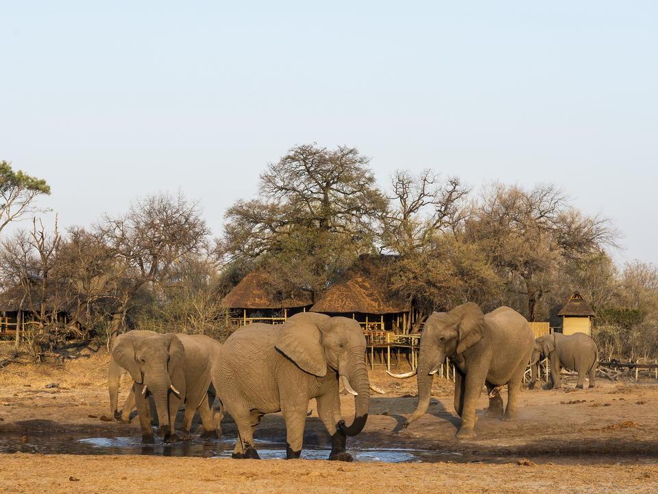 Elefant versammeln sich am Wasserloch vor dem Lager