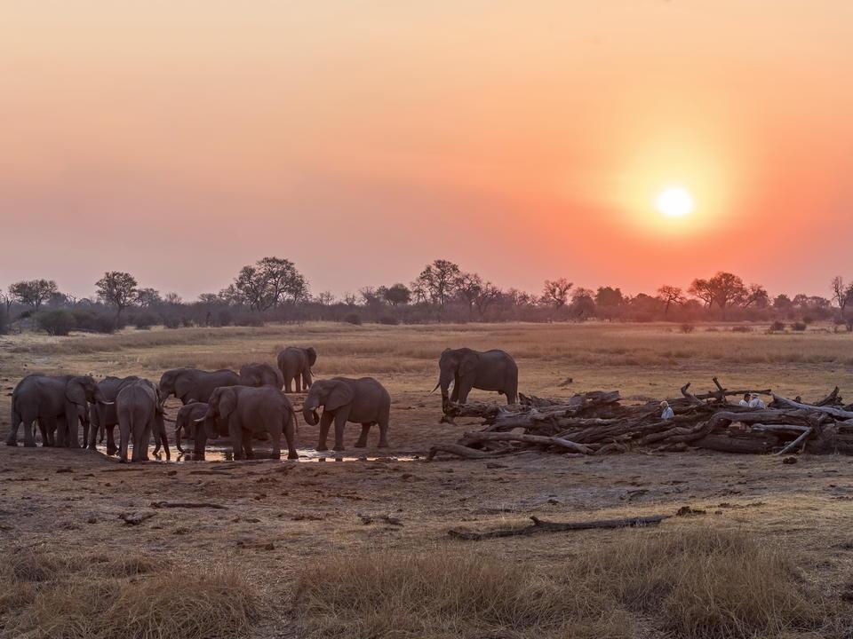 Die Savuti-Region beherbergt eine der dichtesten Konzentrationen von Elefanten in der Trockenzeit in Afrika