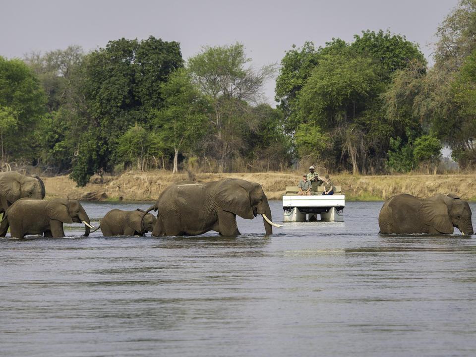 Elefanten werden regelmäßig vom Ponton aus gesehen, während sie sich über die Zambesi bewegen