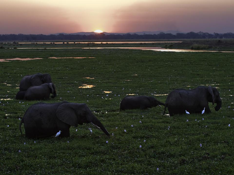 Afrikanische Elefanten Fütterung in der Aue
