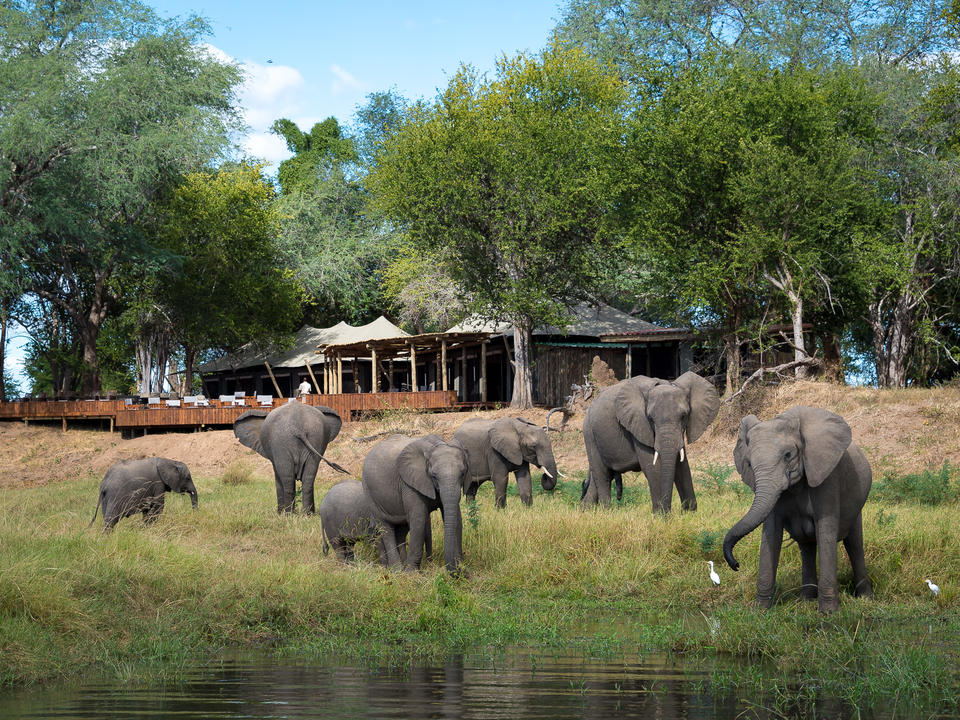 Ruckomechi ist das Lieblingslager der Elefanten