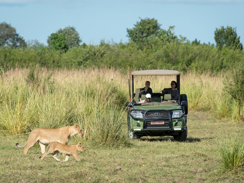 Raubtiere wie Löwe werden oft auf Pirschfahrten gesichtet