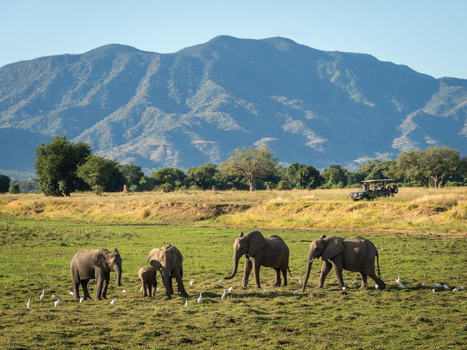 Elefant auf einer Fahrt vom Lager gesehen